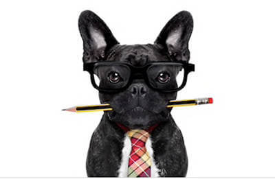 french bulldog with pencil